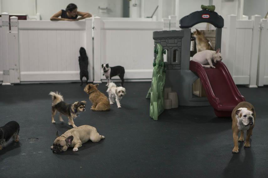 D pet hotels manhattan sideways for Five star dog resort